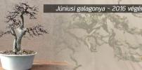 Júniusi galagonya 2016 végén - csak videó